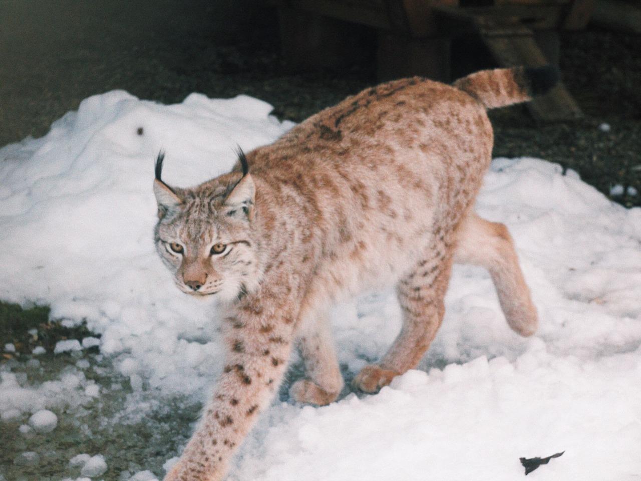 Знакомство с дикими животными Кавказа  - индивидуальная экскурсия в Сочи от опытного гида