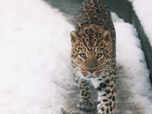 Знакомство с дикими животными Кавказа