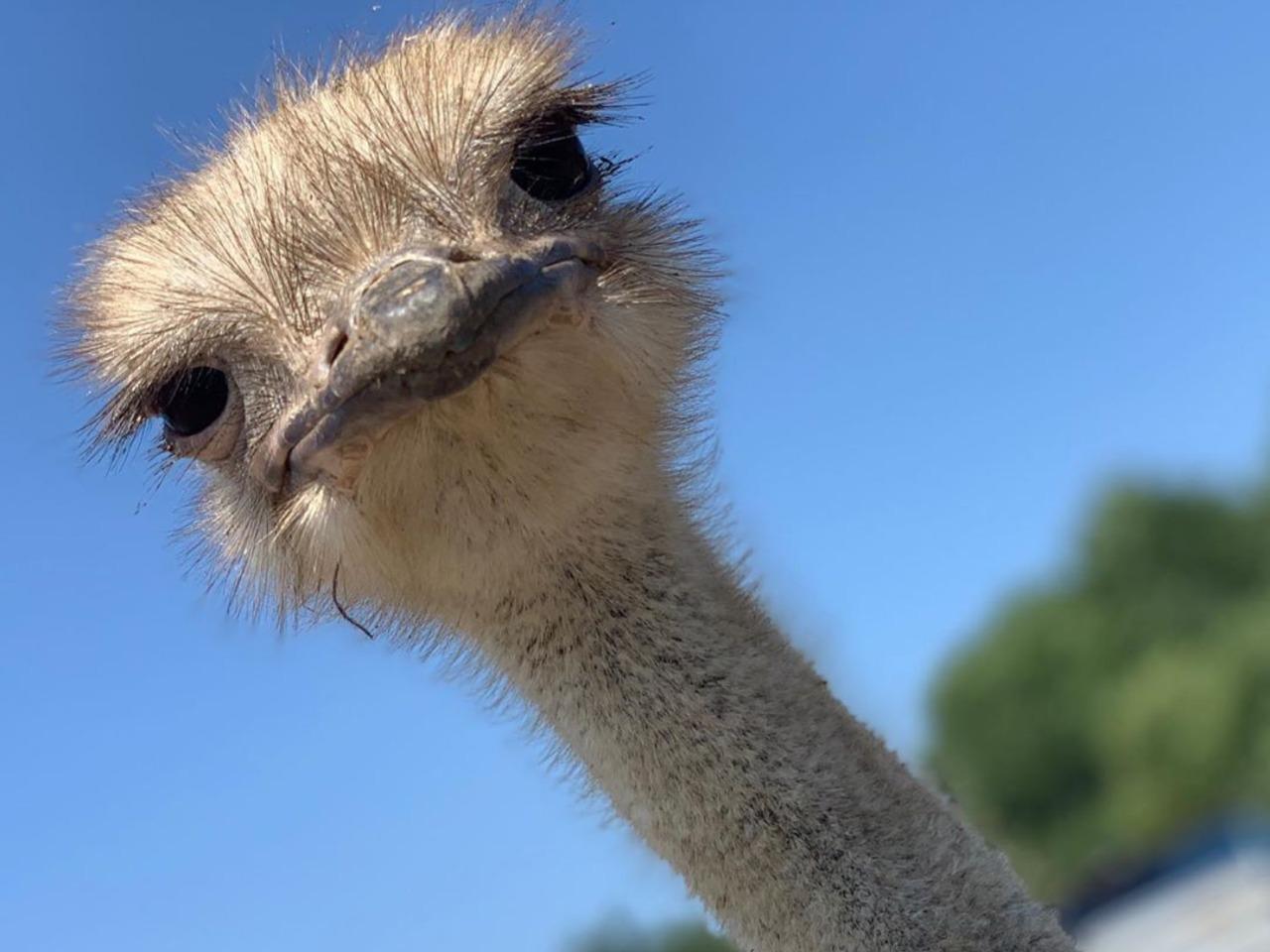 Страусовая ферма и контактный зоопарк - индивидуальная экскурсия в Анапе от опытного гида