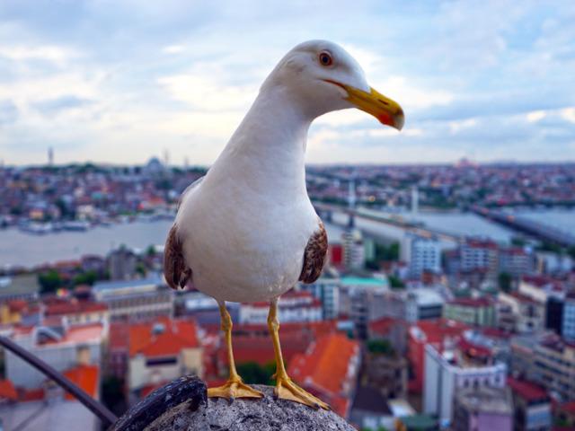 Главные символы Стамбула - чайки, море и мечети