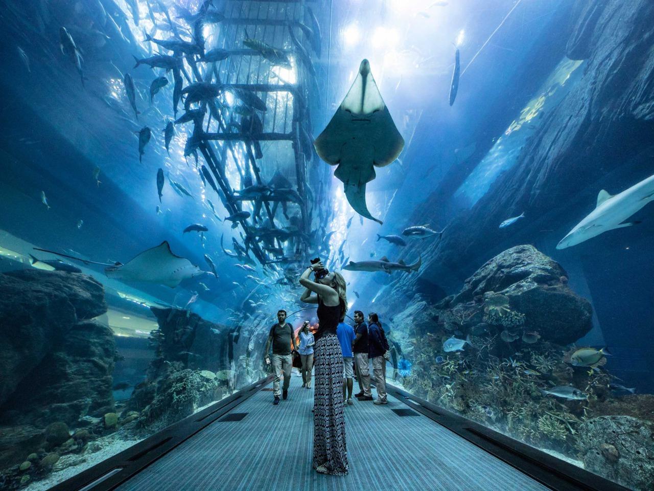 Океанариум в Dubai — Mall - групповая экскурсия в Дубае от опытного гида