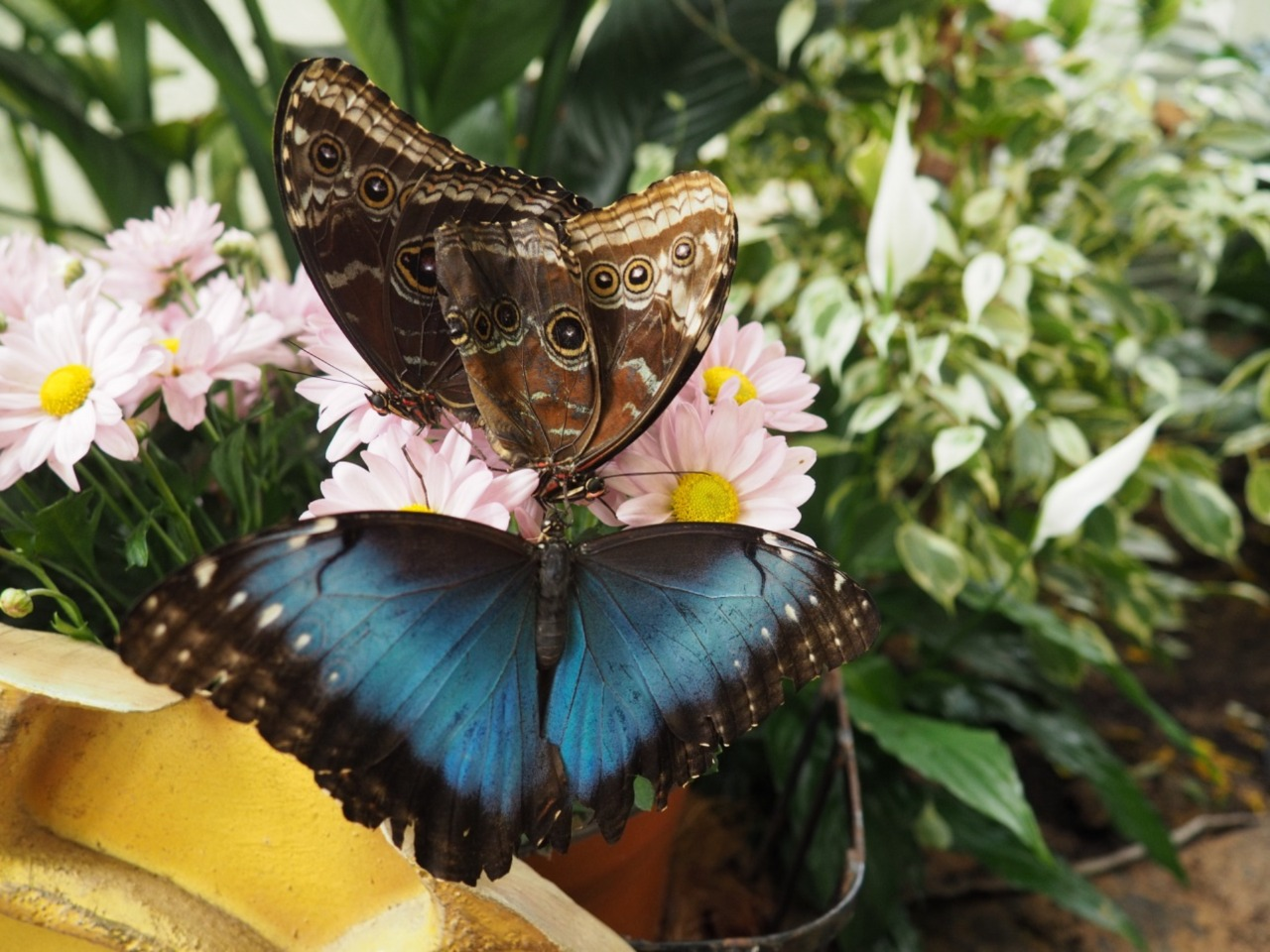 Парк Бабочек - индивидуальная экскурсия в Дубае от опытного гида