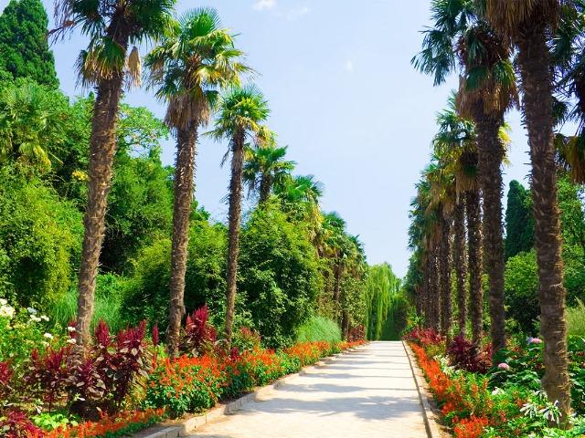 Никитский ботанический сад – цветущий рай в Крыму