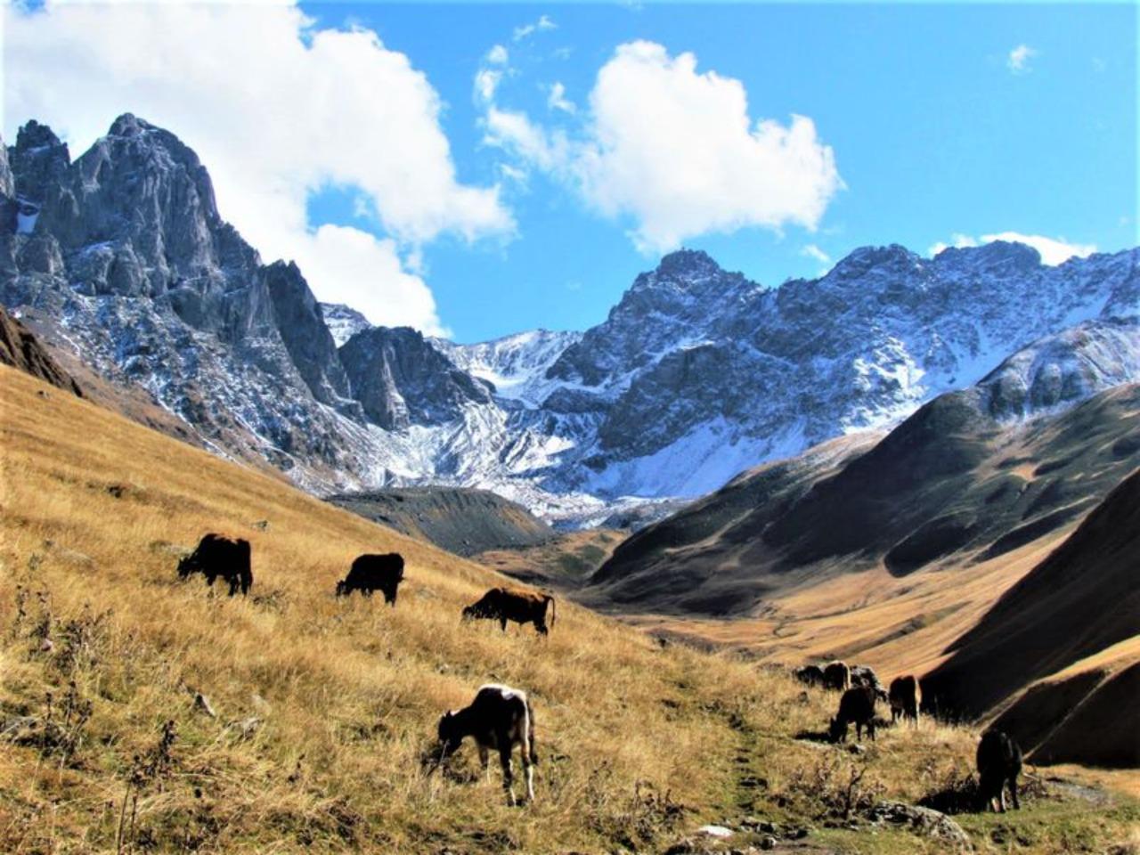 Легендарный Казбеги - индивидуальная экскурсия в Тбилиси от опытного гида
