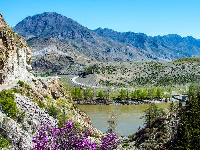 Алтайский эксклюзив: цветение маральника