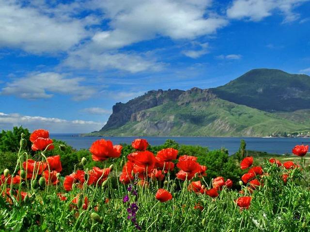 Цветущий Крым: ботанические походы для ума и души