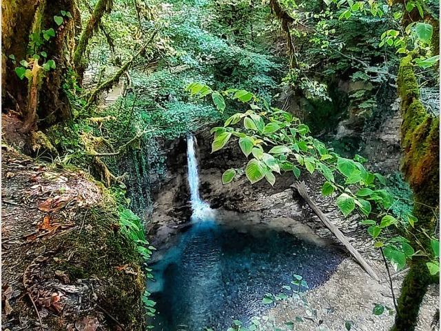 Прогулка к прохладным водопадам в колхидском лесу